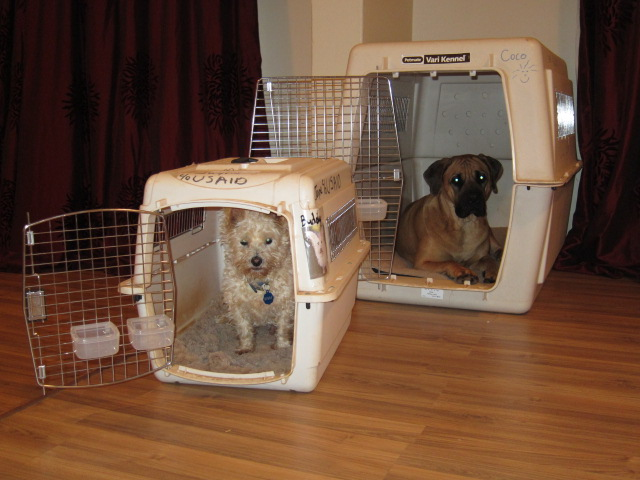 Delta Cargo Dog Kennel